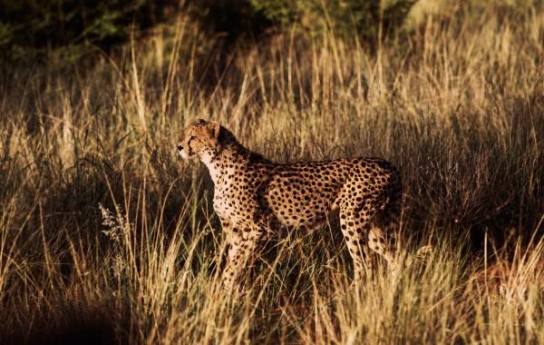 Namibia / DN