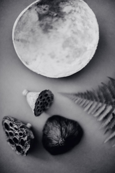 seed pods & moon